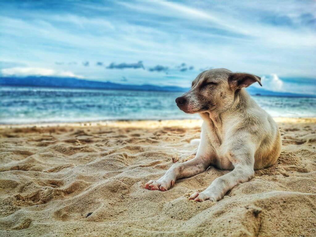 perrito en la playa: como evitar el golpe de calor