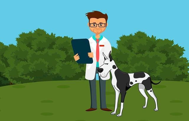 ver anuncios sobre mascotas veterinario