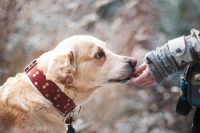 coronavirus y mascotas : perro lamiendo mano