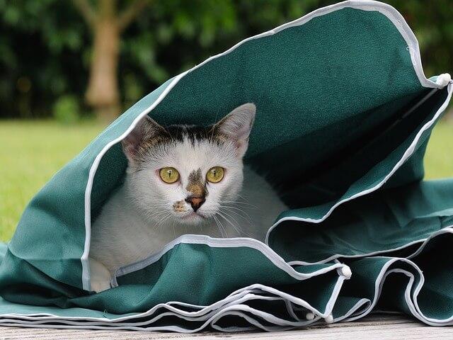 gatos escondidos