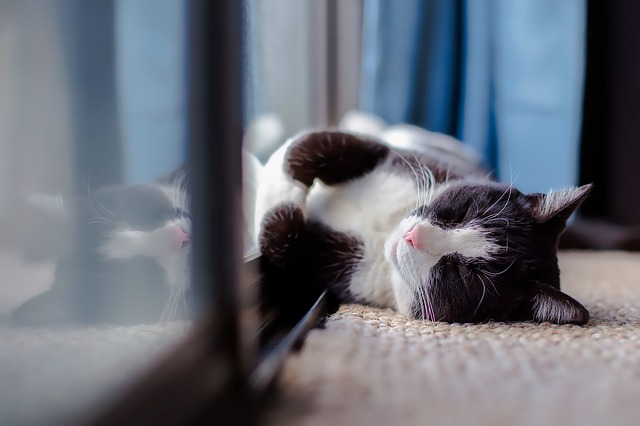 gato dormilón