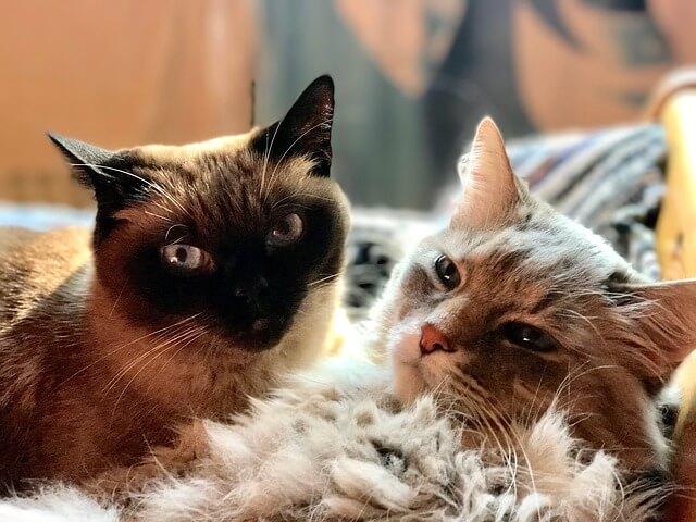 gatos mimosos