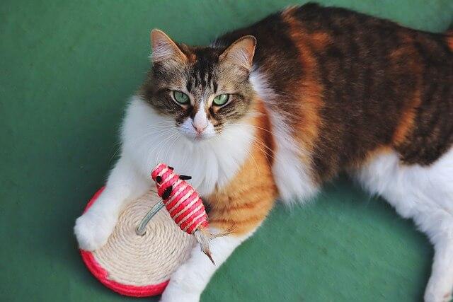 gato con juguete
