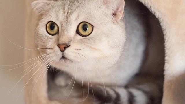 mascota gato