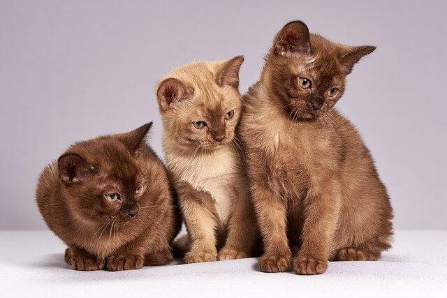 mundo mascotas gatos curiosos
