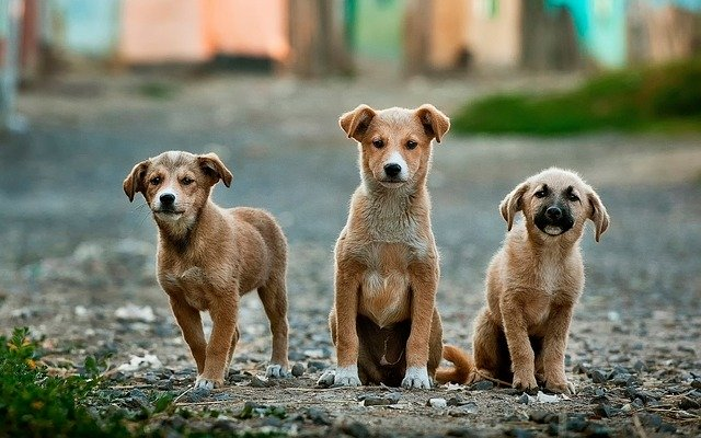 adoptar perros