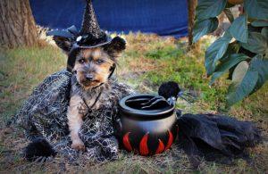 perritos y halloween