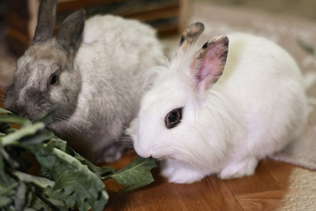 mascota conejos