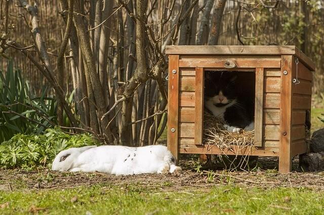hábitat de conejo