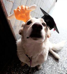 Blanquita mi mascota
