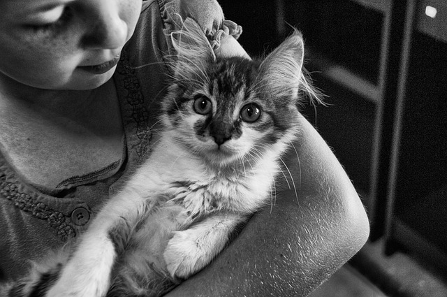 niña con gatito