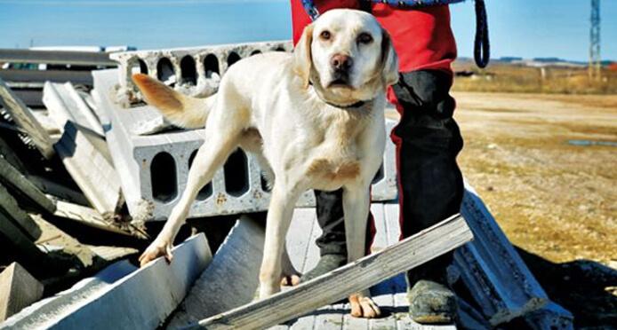 Turco perro héroe