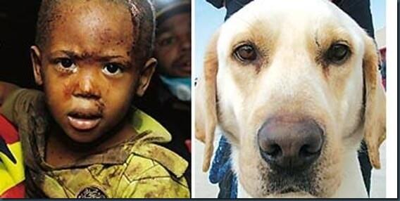 turco perro heroe